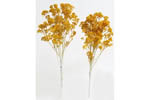 Fall Aspen Trees - Medium (10 Pack)
