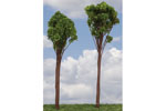 Oak Trees - Medium (6 Pack)