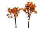 Fall Oak Trees - Medium (10 Pack)