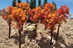 Fall Oak Trees - Small (15 Pack)