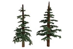 Lodgepole Pines - Small (5 Pack)