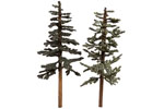 Lodgepole Pines - Medium (4 Pack)