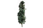 Spruce Trees - Medium (10 Pack)