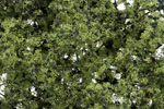 Fine-Leaf Foliage - Light Green