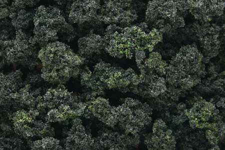 Bushes - Forest Blend