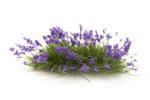 Flowering Tufts - Violet
