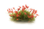 Flowering Tufts - Red