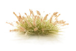 Seeding Tufts - Brown
