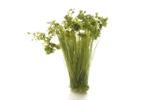 Prairie Grass - Medium Green
